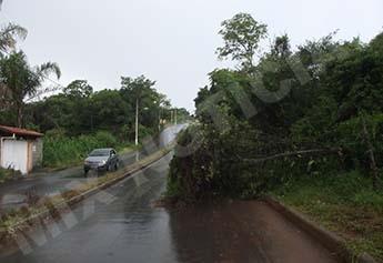 Árvore caiu no Andyara