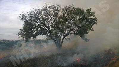 Fogo destruiu a vegetação e queimou árvores que ficam no terreno