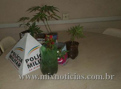 Erva era cultivada em caixinhas de leite e pets