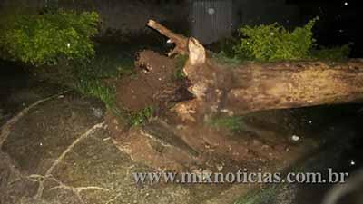 Queda de árvore na Rua José Pires Xavier Sobrinho no bairro Triângulo