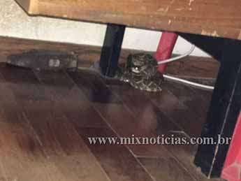 Cobra se escondeu embaixo da cama
