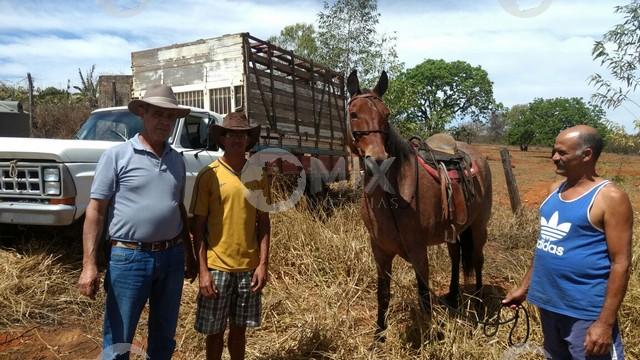 Caminhão era usado no transporte de gado e cavalos